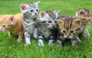 К чему женщине снится много маленьких котят: толкование сонников