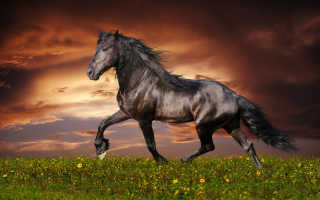 К чему снится конь: толкование по различным сонникам