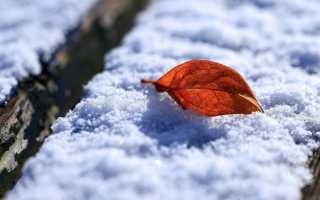 К чему снится, что выпадает снег осенью: значение по соннику