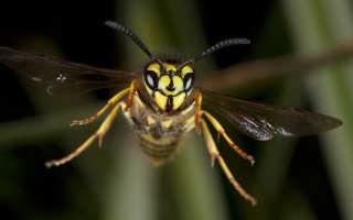 К чему снятся осы: толкование различных сонников