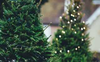 Трактовка сонников: к чему снится живая или искусственная ёлка