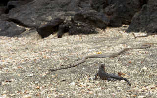 Толкование в соннике убегать от змеи, если снится женщине или мужчине