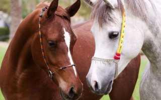 К чему снится лошадь: толкование по сонникам