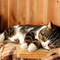 Толкование по сонникам для женщин и мужчин к чему снится кошка