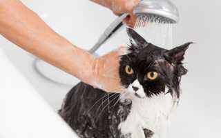 К чему снится мыть кота или кошку по разным сонникам