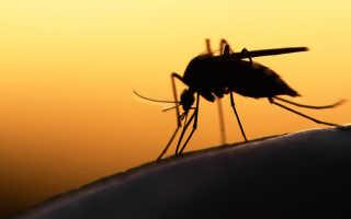 К чему снятся комары: что значит видеть или убивать их по соннику