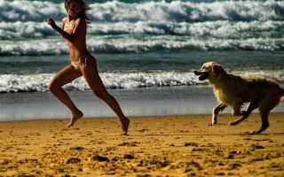 Что значит убегать от собаки во сне: толкования сонников