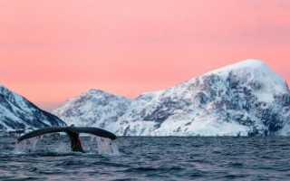 Толкования к чему снится кит по соннику Миллера и другим