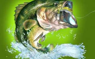 К чему снится большая рыба в воде женщине или девушке