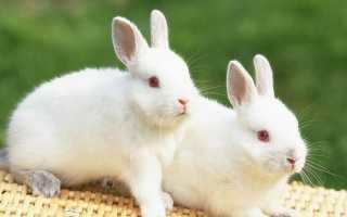 Толкование снов: к чему снится много кроликов