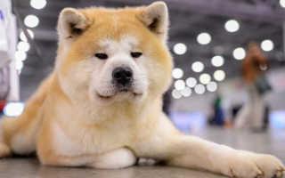 Толкование сонника: к чему снится завести собаку или щенка