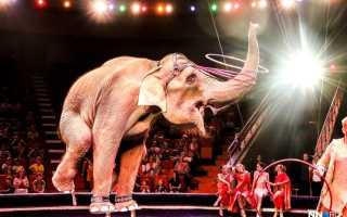 К чему по сонникам снится цирк и представления с животными