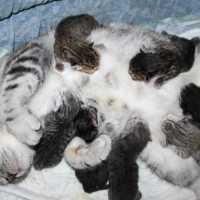 Кошка родила котят во сне: толкование по сонникам