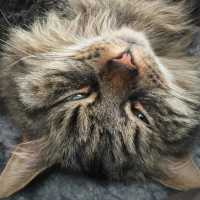 Убить кошку во сне: трактовка сновидения в разных сонниках