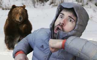 К чему снится убегать от медведя — значение сонников