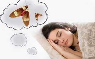 К чему снится убивать или видеть моль во сне