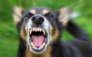 К чему снится большая злая собака: толкования сонников