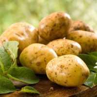 К чему снится картошка: подробное толкование по сонникам