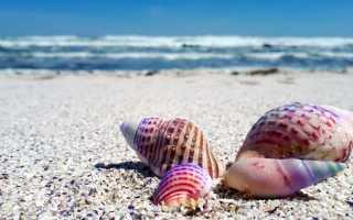 Сон, где снятся морские ракушки: толкование по сонникам