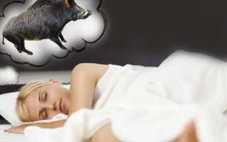 К чему снится кабан: мужчине, женщине, охота по соннику