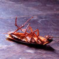 К чему снятся тараканы женщине и что означает убивать их по соннику