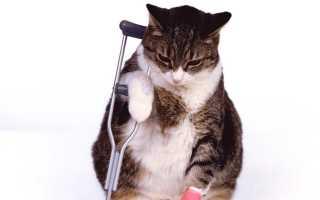 К чему снится больная кошка женщине и что означает увидеть котёнка