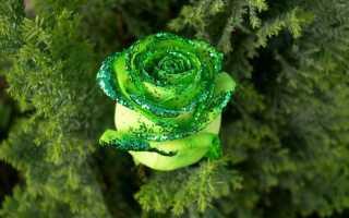 К чему снится зелёный цвет: толкование по различным сонникам