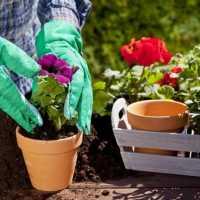 К чему снится сажать цветы по разным сонникам