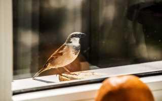 К чему снится птица, залетевшая в окно дома