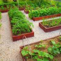Сон, где снятся грядки в огороде: толкования в сонниках