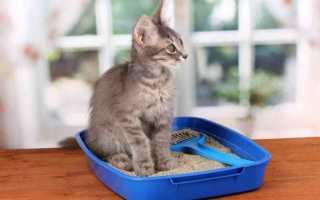 К чему снится кошачье говно и неприятных запах от него в квартире