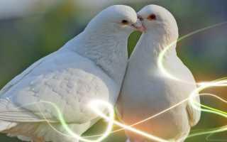 К чему снятся голуби: толкование по сонникам