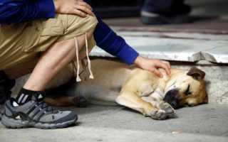 Что означает сон об умершей собаке и к чему снится пес хозяину