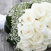 Толкования разных сонников, к чему снятся белые розы