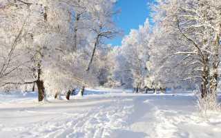 Толкование по Ванге, Миллеру, семейному соннику к чему снится снег
