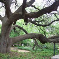 К чему снится дерево: толкование по различным сонникам
