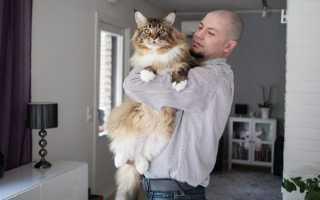 К чему снится большой пушистый кот: толкование по сонникам