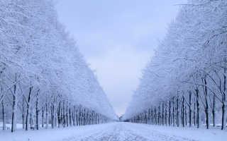 Объяснение того, почему снится зима со снегом летом или осенью