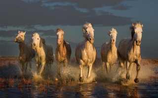 Толкование сна: к чему снится табун лошадей