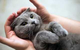 К чему снится кот — узнать значение сна