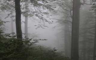 К чему снится густой туман на дороге или над водой