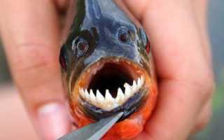 Что значит, если во сне укусила рыба за руку