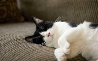 К чему снится черно-белый кот по соннику