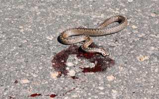 К чему мужчинам и женщинам снятся мертвые змеи