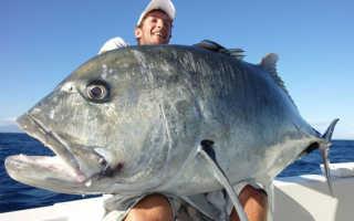 К чему снится ловить или поймать большую рыбу во сне