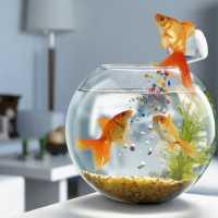 К чему снятся рыбки в аквариуме мужчине и женщине