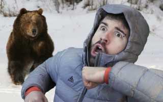 Сонник: к чему снится сон «медведь гонится за мной»