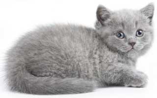 К чему снится пушистый серый котёнок: толкования сонников