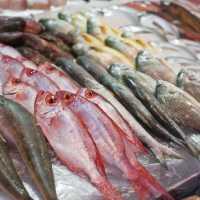Сонник: к чему снится сырая рыба и что ожидать после такого сна
