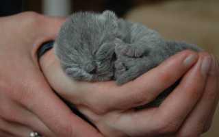 К чему женщине снится сон о новорожденных котятах с кошкой